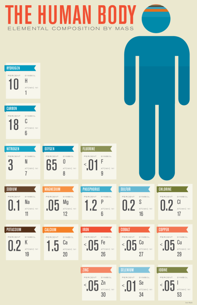 human-body-composition