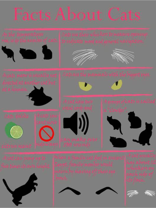 infographics_mullenkenzie