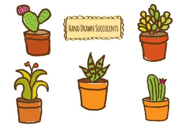 hd-succulents-cm-o